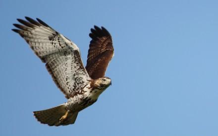 FITNESS hawk focus