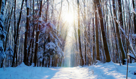wintry-forest-path
