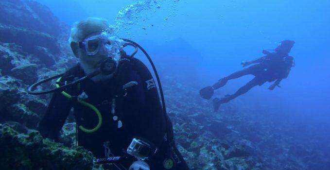 Sea Turtles Turtle Island Restoration Network
