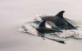 International Marine Mammal Project - MMP