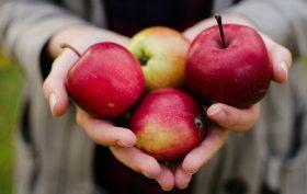 Dr Neal Barnard-Nutrition Myths