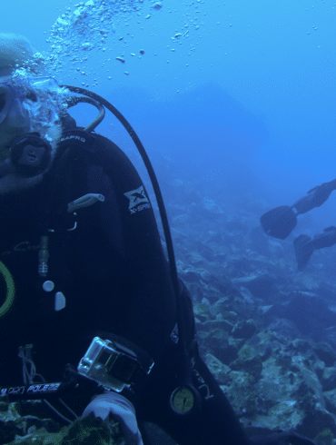 Todd Steiner, turtle island, restoration network, community