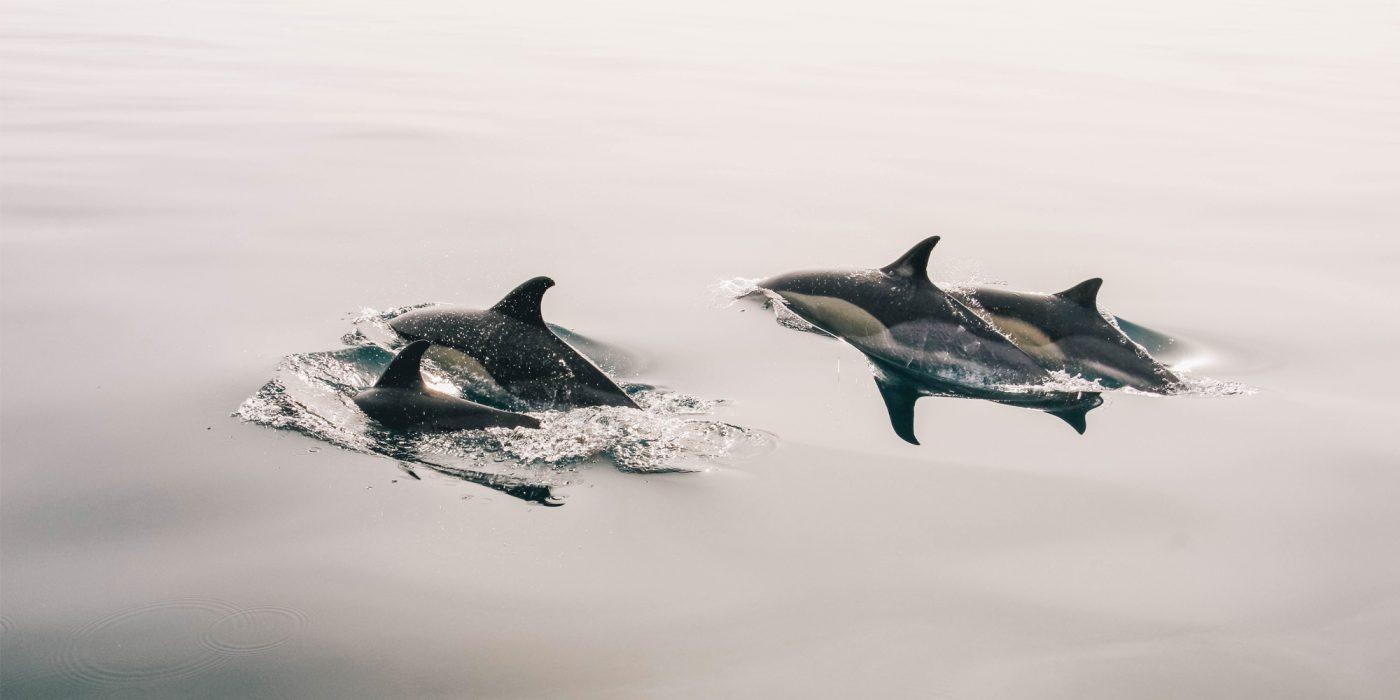 International Marine Mammal Project, IMMP, Keiko, Mark Palmer