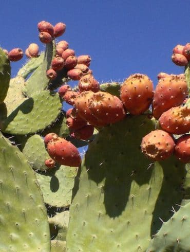Mun, organic skincare, prickly pear seen oil, benefits of niacinimide