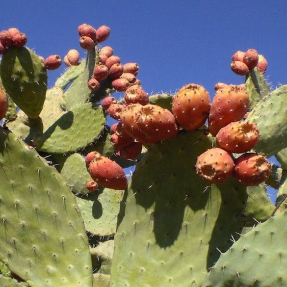 Mun, organic skincare, prickly pear seen oil, benefits of niacinimide