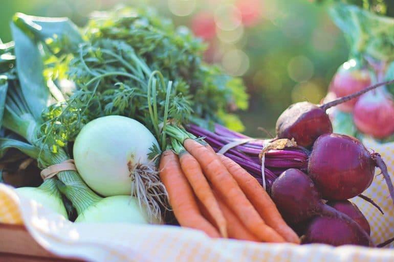plant based, vegan recipes