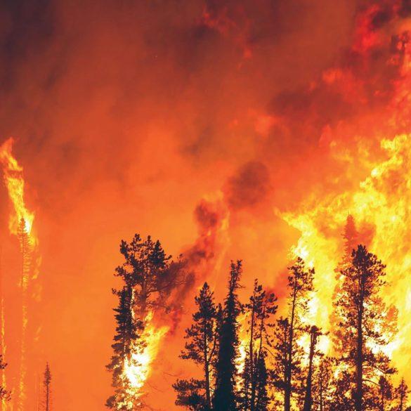 Parvati Magazine for MAPS, Marine Arctic Peace Sanctuary, forest fire