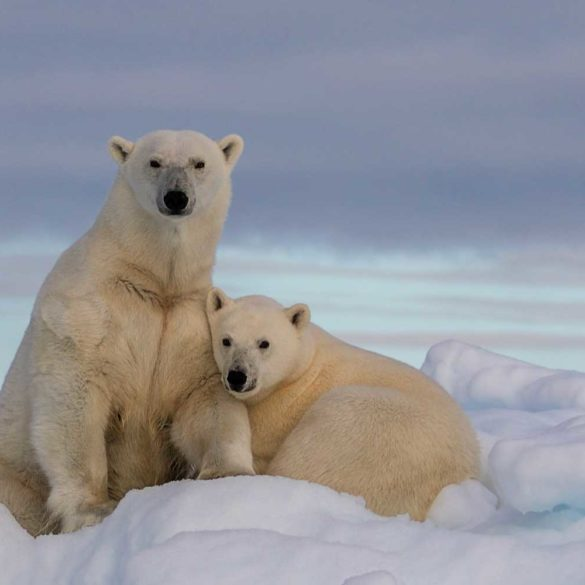 Parvati Magazine, Marine Arctic Peace Sanctuary, Science of MAPS, Arctic ocean ice