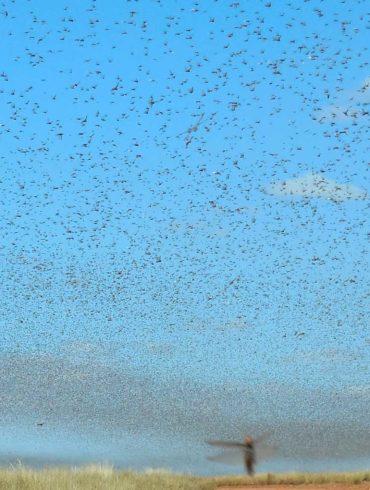 Parvati Magazine, MAPS, Marine Arctic Peace Sanctuary,Maps NEWS, swarm of locusts